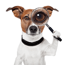 chien-loupe-seul