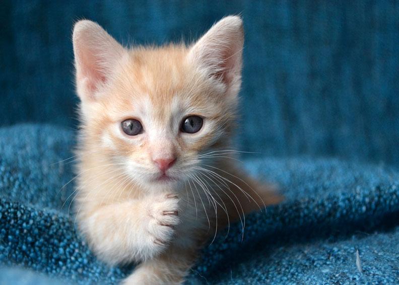 jeune chat chaton sarlat